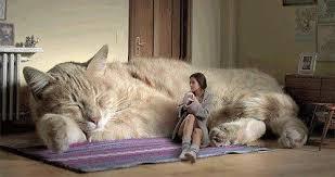"""Résultat de recherche d'images pour """"le chat le plus lourd du monde"""""""